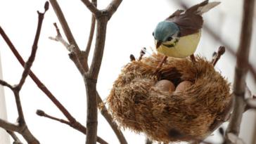 oiseau couve oeufs nid