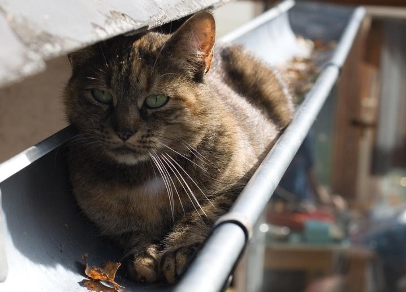 10 signes qui montrent que votre chat est trop stress. Black Bedroom Furniture Sets. Home Design Ideas
