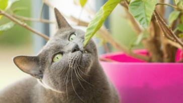 chat mange plante
