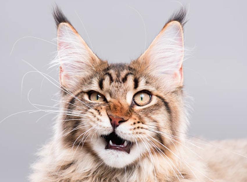chats agressifs que faire
