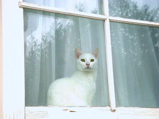 combien de temps peut on laisser un chat seul. Black Bedroom Furniture Sets. Home Design Ideas
