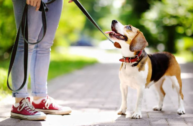 chien laisse promenade humain