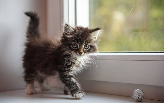 chaton fenêtre