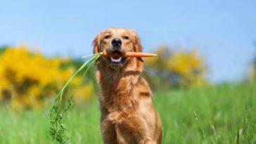 chien légume