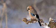 oiseau branche neige