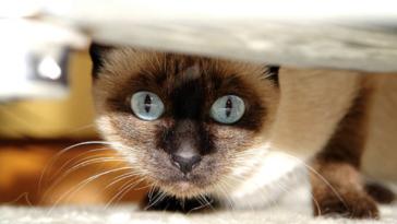 chat stressé