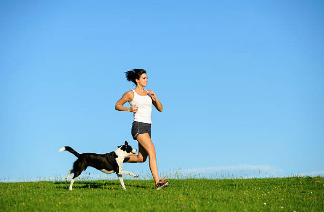 chien court jogging femme humain