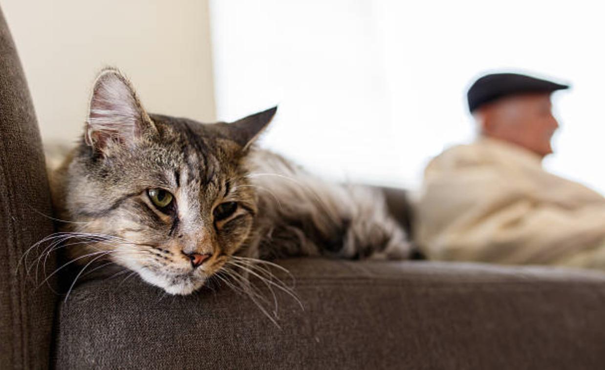 chat canapé