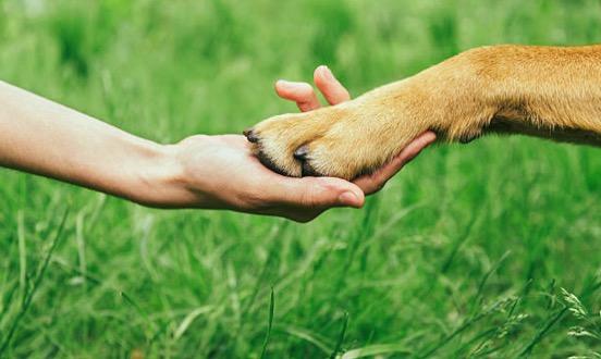 chien patte griffes main