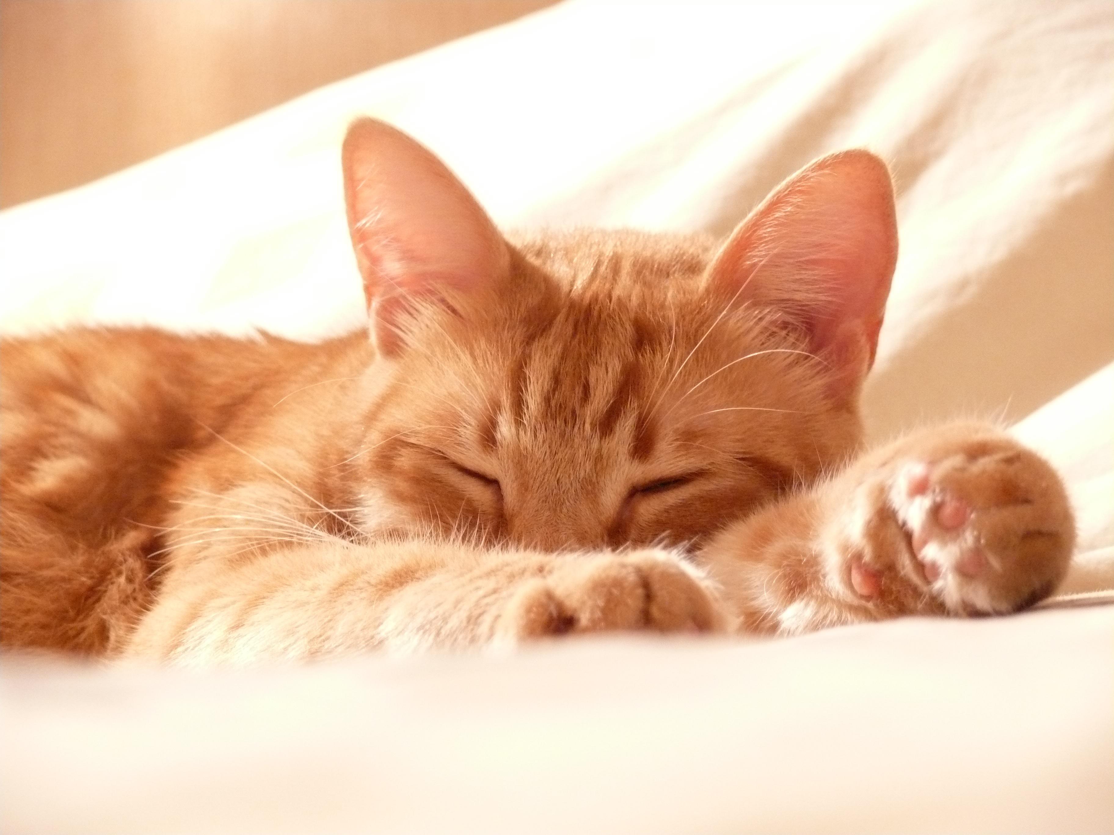 Mon Chat Dort Sur Mes Pieds pourquoi mon chat dort-il avec moi ?