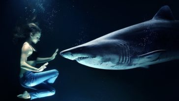 requin femme humain