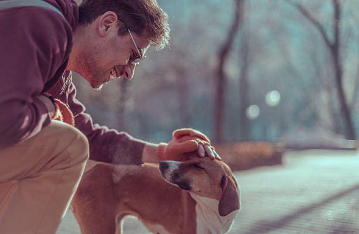 chien câlin caresse humain rue