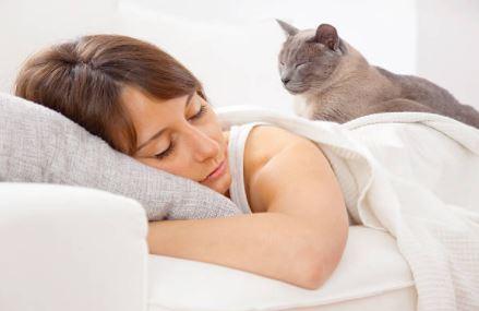 chat lit femme dort humain