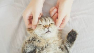 chaton massage