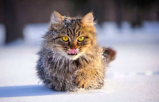 chat neige hiver froid
