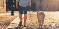 chien promenade laisse ville rue