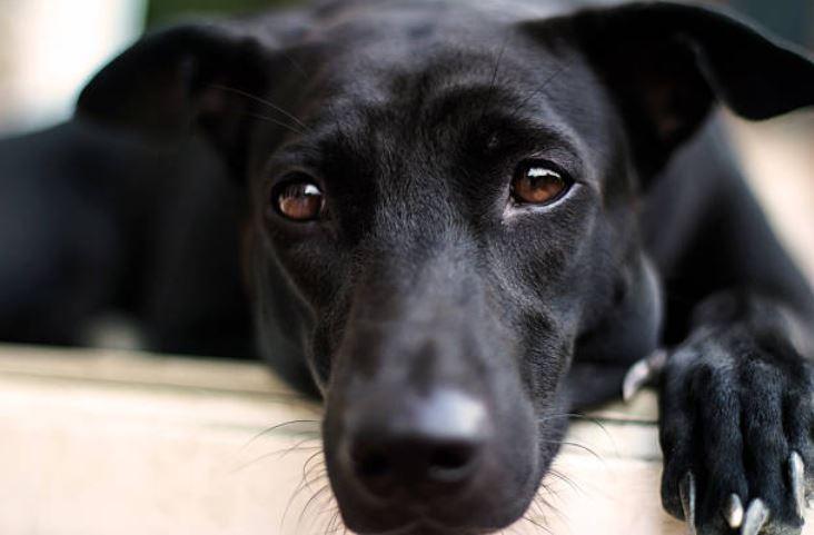 chien noir triste