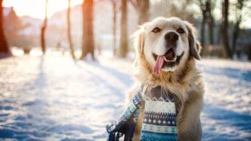 chien neige hiver froid écharpe