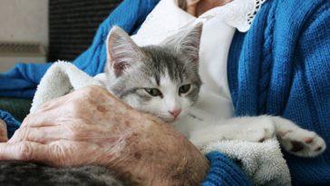 chat câlin humain personne âgée