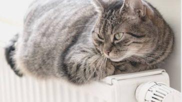 chat couché radiateur