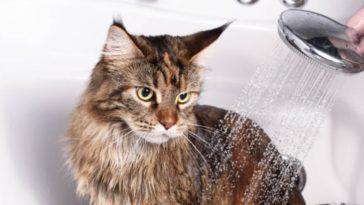 chat bain douche eau lave