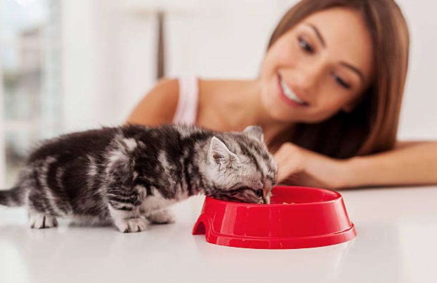 chaton mange bol femme humaine