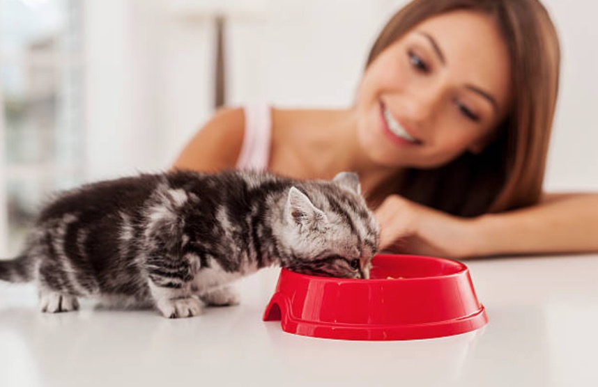 chaton mange gamelle femme humain
