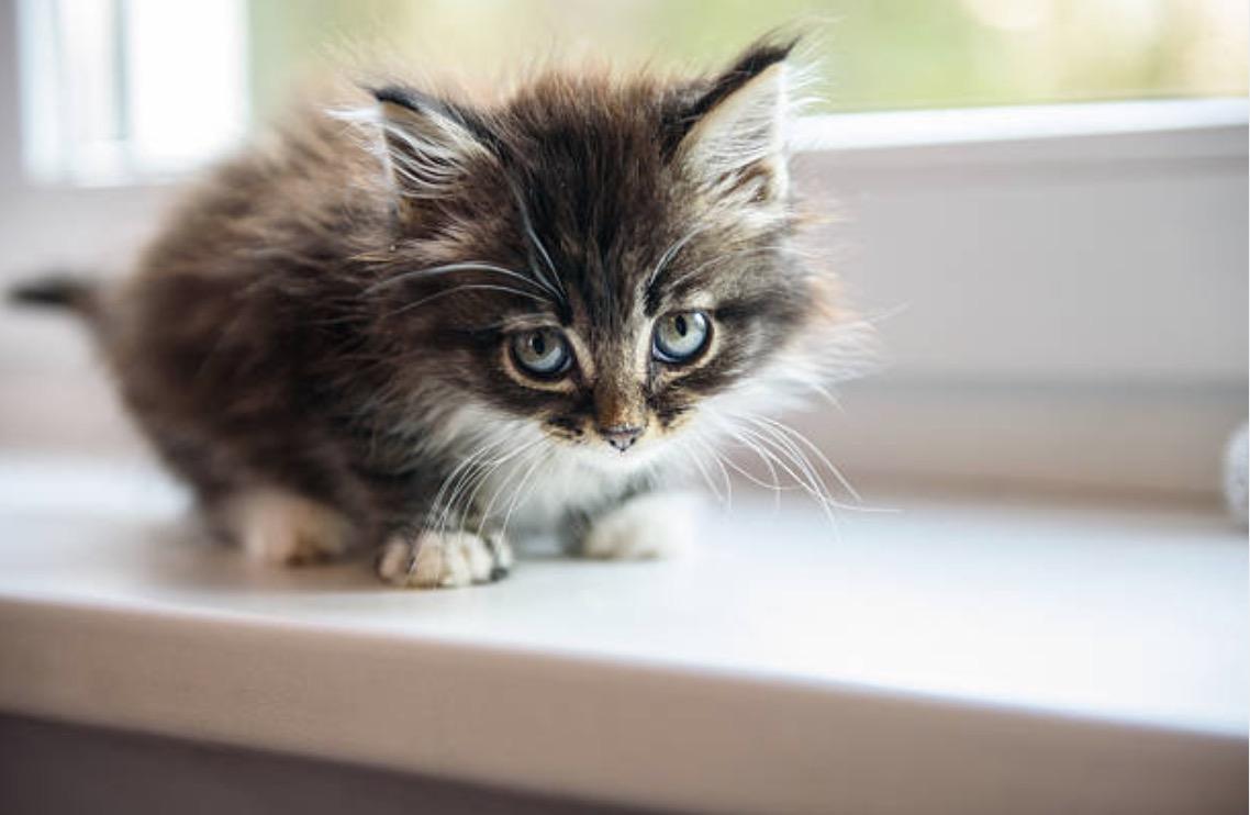 8 choses savoir pour s 39 occuper d 39 un chaton abandonn. Black Bedroom Furniture Sets. Home Design Ideas