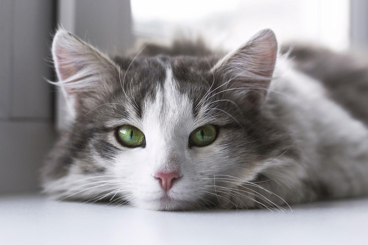 Une grosse joue avec sa chatte toute humide
