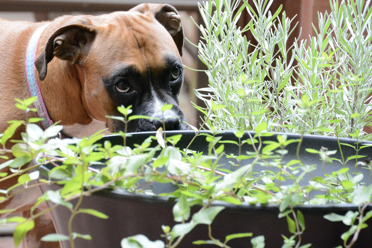 3 astuces pour dissuader votre chien de manger les plantes