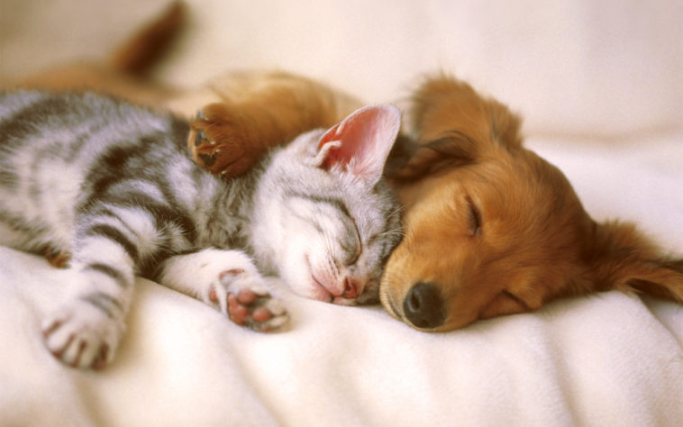 chiot chaton chien chat