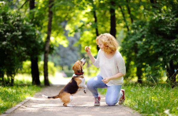 chien beagle femme humain joue éducation