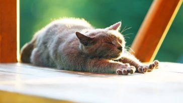 chat soleil