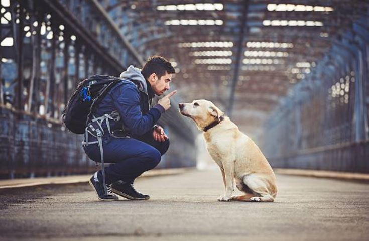 chien éducation