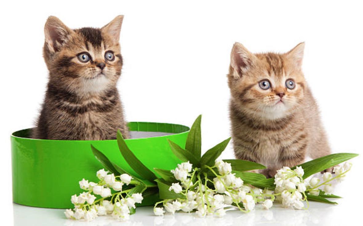 Le muguet une plante tr s toxique pour les chats et les chiens animalaxy - Plante non toxique pour chat ...