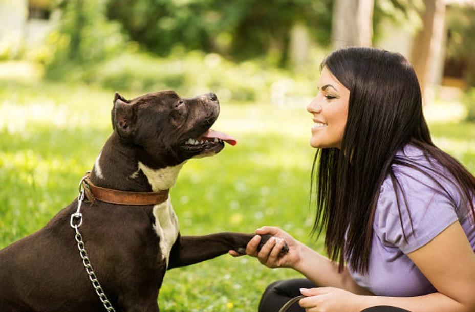 chien donne patte humain femme