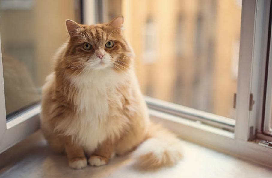 chat énervé