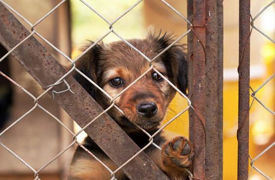 chien chiot cage refuge triste