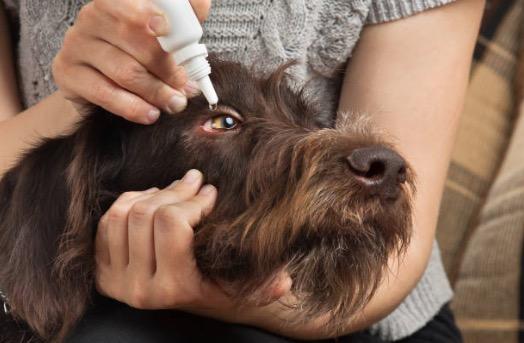 chien nettoyant oculaire goutte yeux