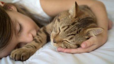 chat dort lit