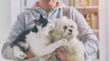 chien chat humain câlin