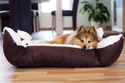 chien couché panier