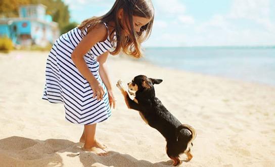 chien joue plage