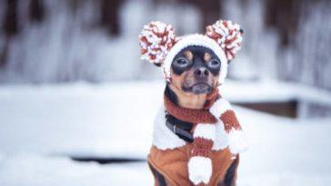 chien froid manteau hiver neige