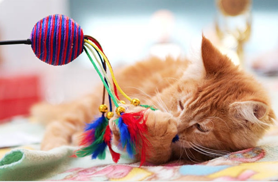 camere de chat pierdere în greutate)