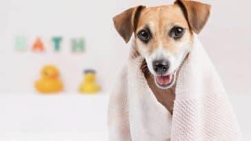 chien bain douche serviette