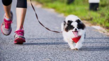 chien court promenade laisse