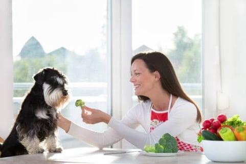 chien mange légumes