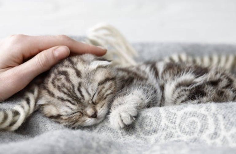 chaton câlin caresse main dort