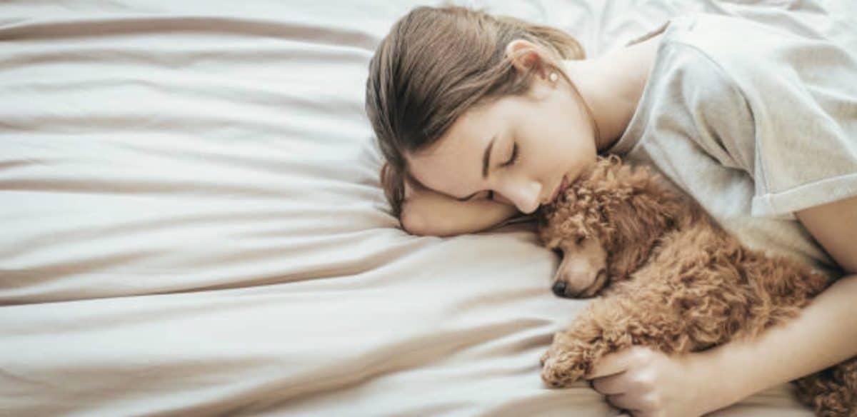 chien couché lit femme humain câlin